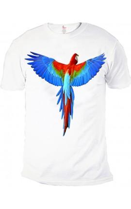 Parrot Uomo